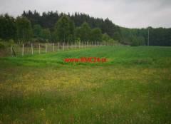 Oferta Działka z własnym lasem w Boronowie
